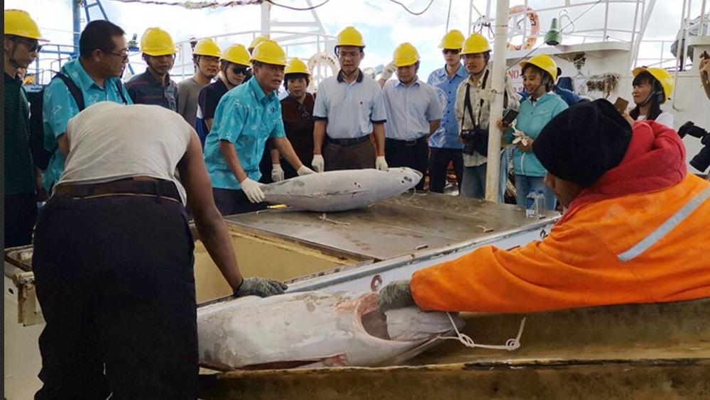 南太平洋島國金槍魚魚類資源得天獨厚