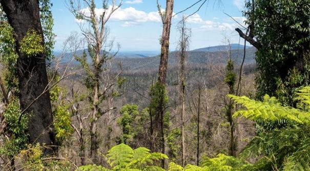 研究:澳大利亞上一季林火影響百余種植物存活