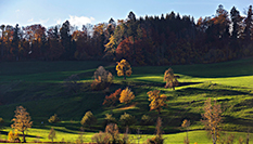 苏黎世的深秋