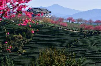 鄉村振興好風景