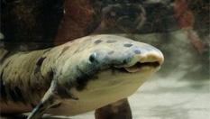 世界最長壽魚在美水族館離世