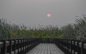 杭州灣濕地的落日秋韻