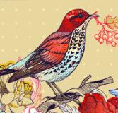 動植物間協同進化:花適應了鳥,還是鳥適應了花