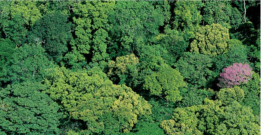 """亞馬孫是綠色的海洋,但偶爾也有""""萬綠從中一點紅"""",那是一棵奔開向滿鮮法花屬的圭大亞樹那。"""