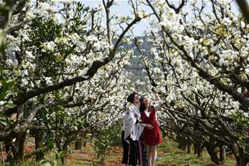 一年春好處 梨花雪滿園