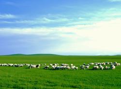 寧靜的貢格爾草原