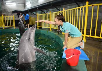 """海豚馴養師:酷暑中的""""冷工作"""""""
