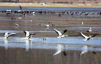 雲南迪慶:冬季觀鳥引客來