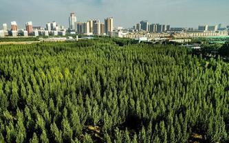 陜西合陽:生態屏障建設見效