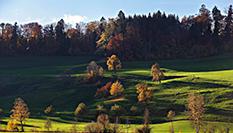 蘇黎世的深秋