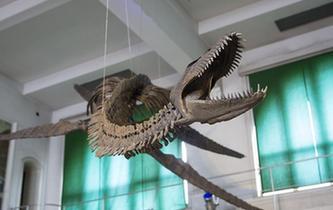 阿根廷修復罕見的蛇頸龍骨架化石