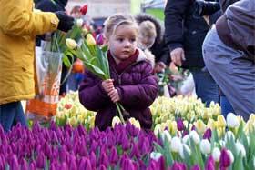 荷蘭迎來國家鬱金香日
