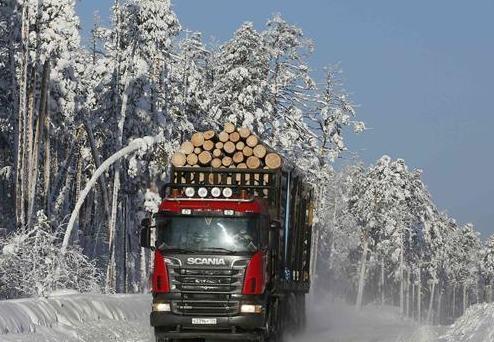 冬季伐木忙