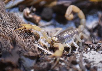 蜘蛛和蝎子的神奇世界