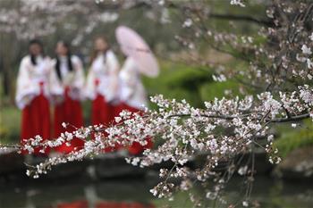 櫻花樹下漢服秀