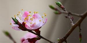 春分:二氣莫交爭,春分雨處行