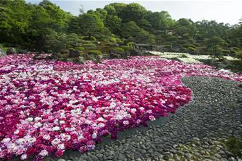 牡丹花滿園