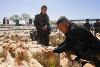 羊群交易市場忙