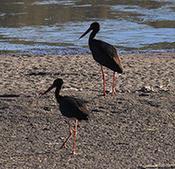 國家一級保護鳥類