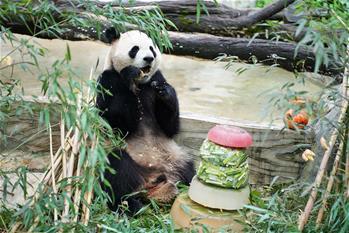 大熊貓過生日