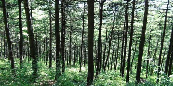養護生態林 注重多樣性