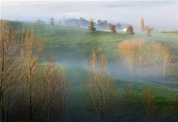 新西蘭的冬日晨霧