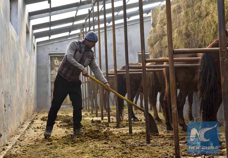 Xinjiang herdsman reins to get rich