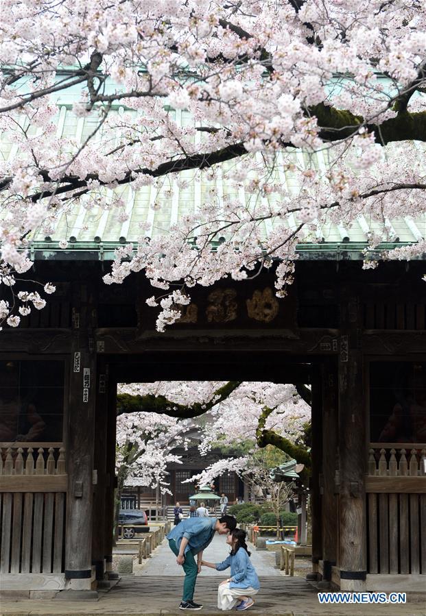 JAPAN-TOKYO-CHERRY BLOSSOMS