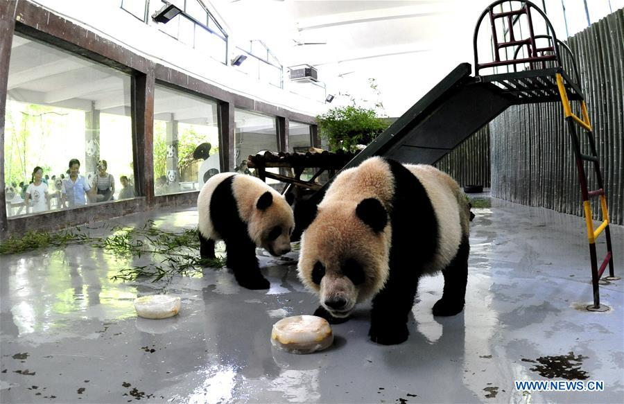 CHINA-SHANGHAI-ANIMAL-SUMMER HEAT (CN)