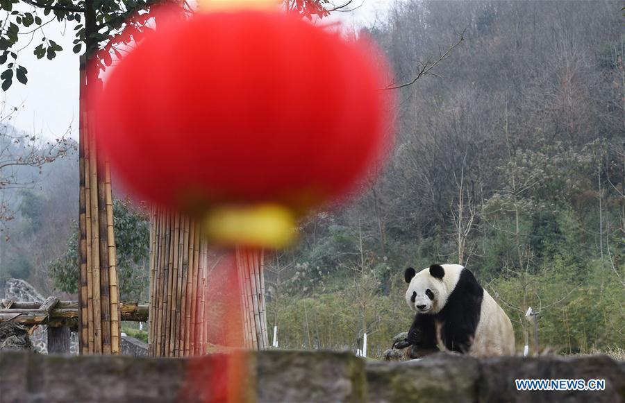 CHINA-GIANT PANDA-NATIONAL PARK (CN)