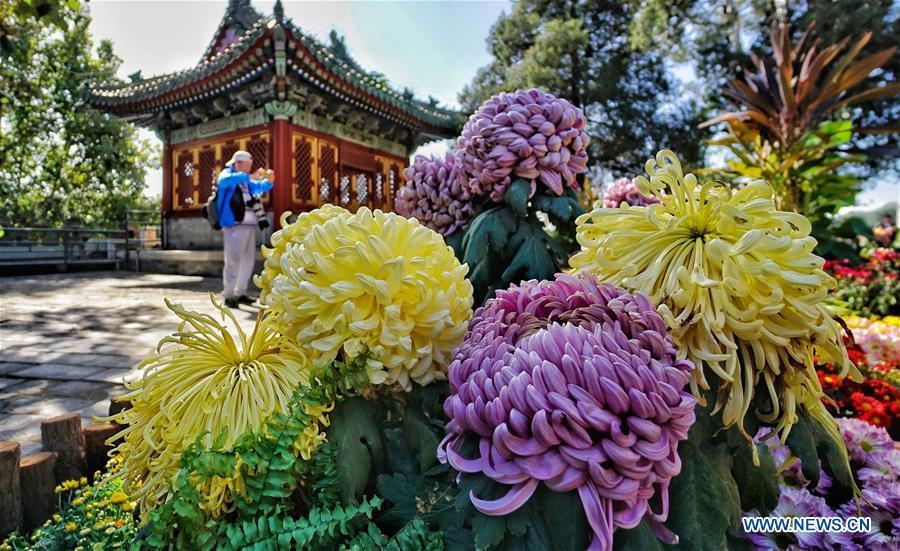 CHINA-BEIJING-CHRYSANTHEMUM FESTIVAL (CN)