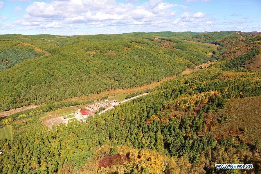 #CHINA-HEBEI-SAIHANBA FOREST (CN)