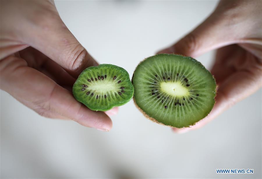 Mini Kiwi Fruits Enter Harvest Season In Ne China S Liaoning Xinhua English News Cn
