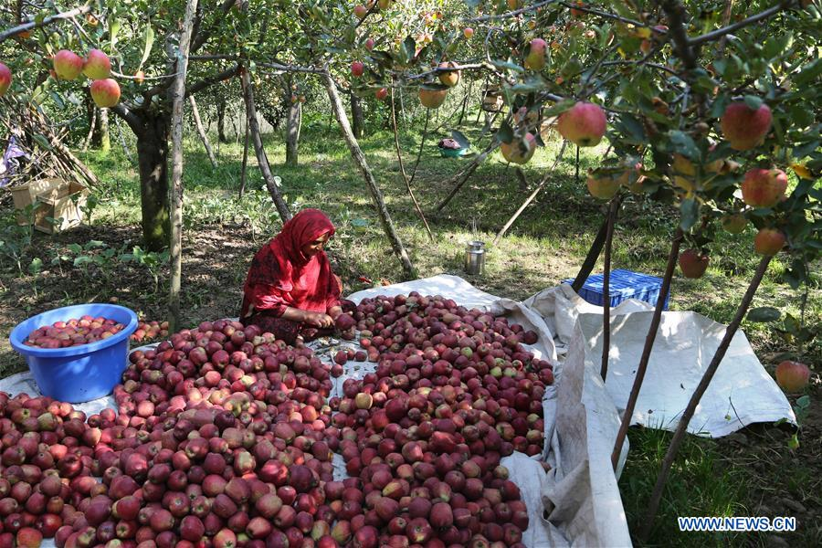 kashmiri apple industry In this series rajiv kohli and kash mittal have brought together the work of experts from different industry sectors and backgrounds to provide a state-of-the-art survey and best-practice guidance for scientists and engineers engaged in surface cleaning or handling the consequences of surface contamination.