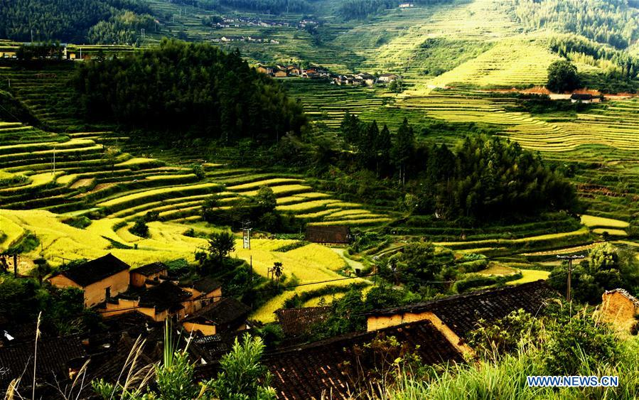 CHINA-FUJIAN-TERRACED FIELD (CN)