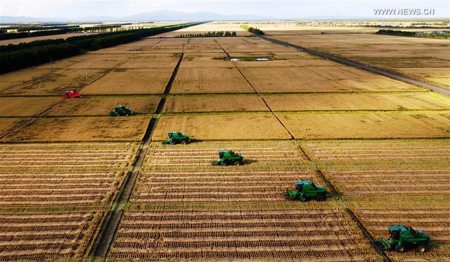 CHINA-HEILONGJIANG-AGRICULTURE-HARVEST(CN)