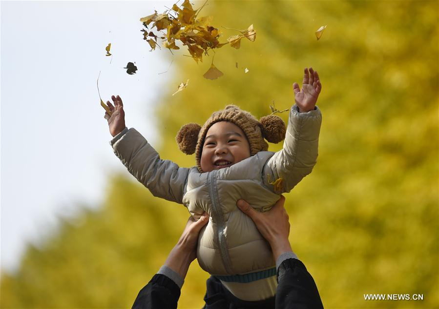 CHINA-LIAONING-GINKGO SCENERY (CN)