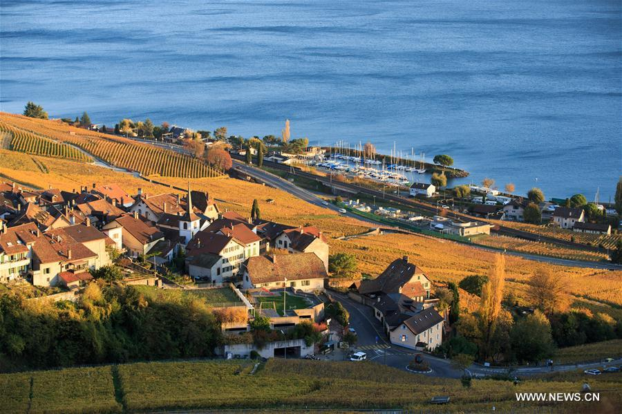 SWITZERLAND-LAVAUX-VINEYARDS-AUTUMN-SCENERY