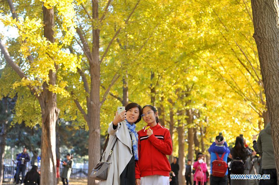 #CHINA-BEIJING-AUTUMN SCENERY(CN)