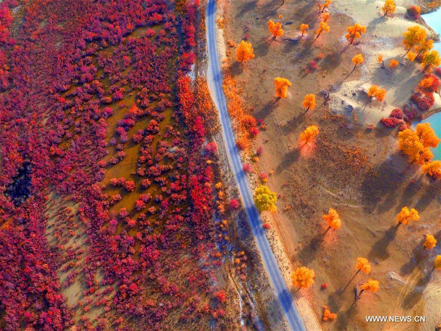 #CHINA-XINJIANG-TARIM RIVER-SCENERY (CN)