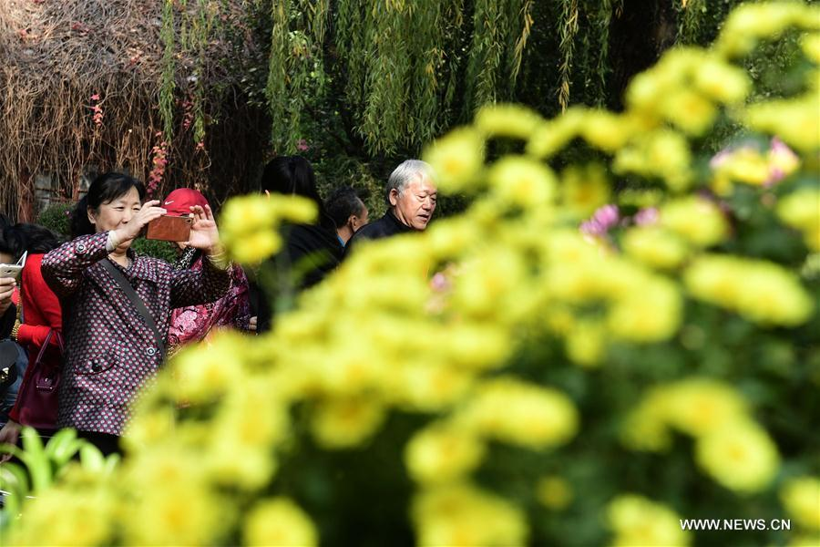 CHINA-JINAN-CHRYSANTHEMUM(CN)