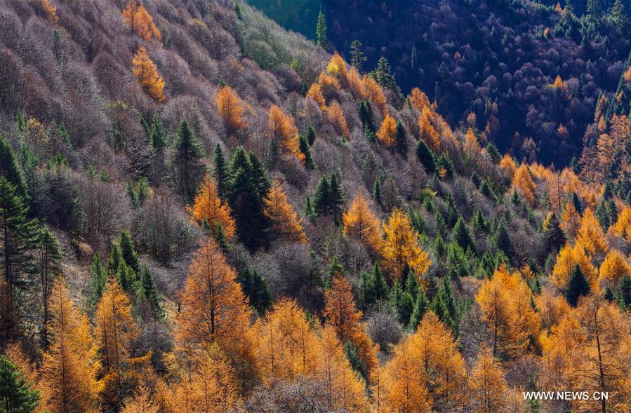 CHINA-TIBET-NYINGCHI-SCENERY (CN)