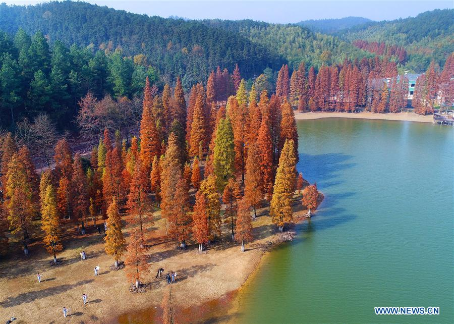 #CHINA-COLORFUL TREES-SCENERY (CN)