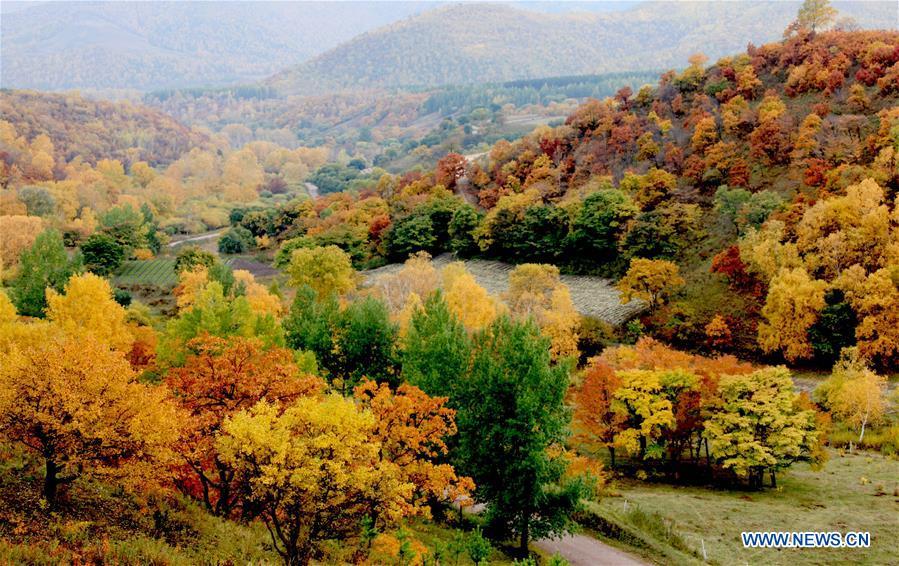 CHINA-HEBEI-CHENGDE-SAIHANBA FOREST (CN)