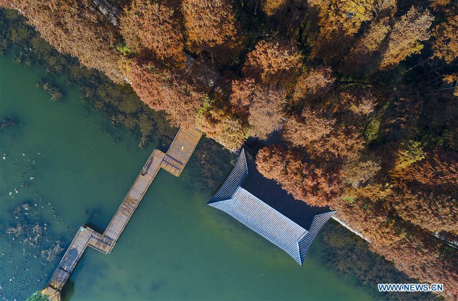 #CHINA-JIANGSU-XINGHUA-WATER FOREST (CN)