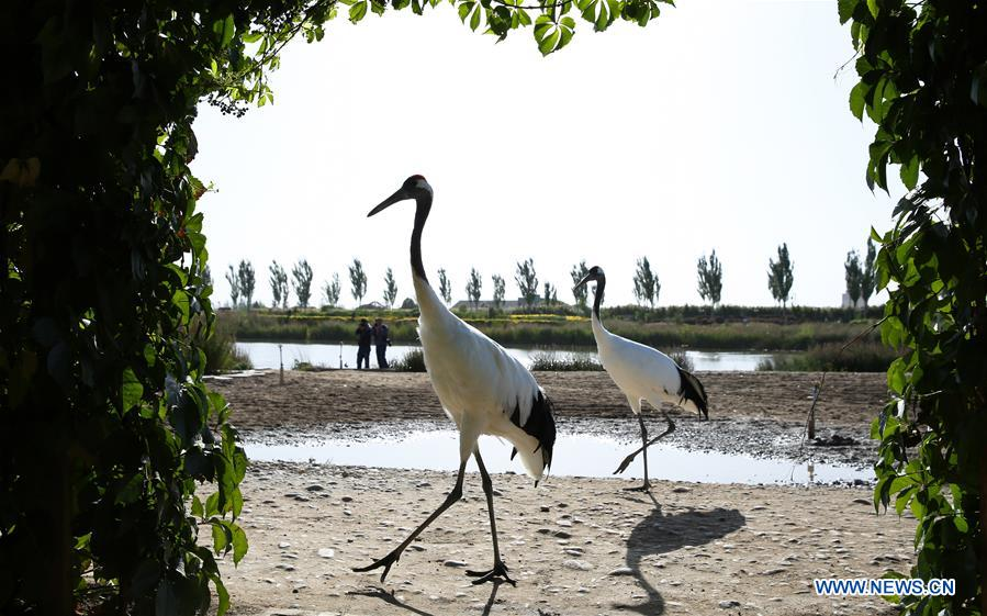 in pics harmony between animals and nature xinhua english news cn