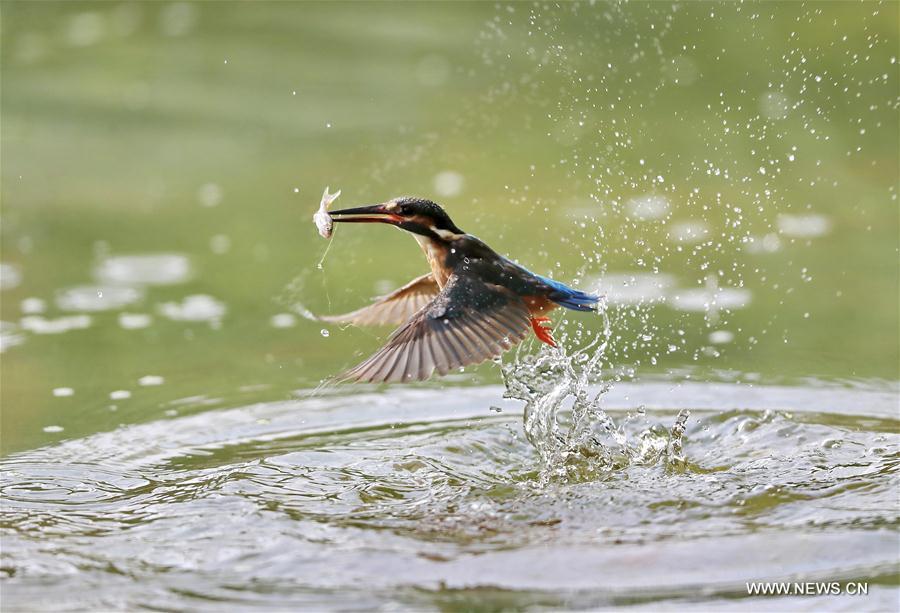 #CHINA-BEIJING-BIRD(CN)