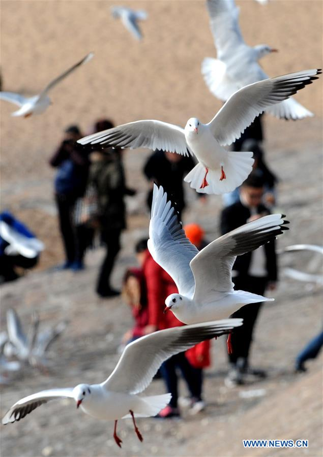 CHINA-QINGDAO-WINTER-SEA GULL (CN)