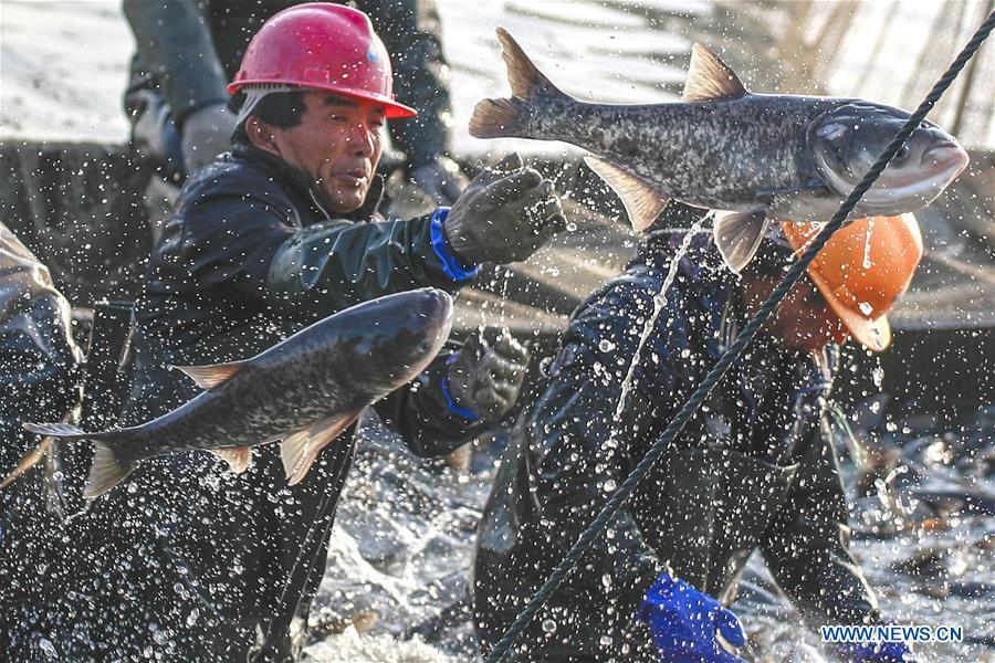 #CHINA-JIANGSU-FISH CATCHING (CN)