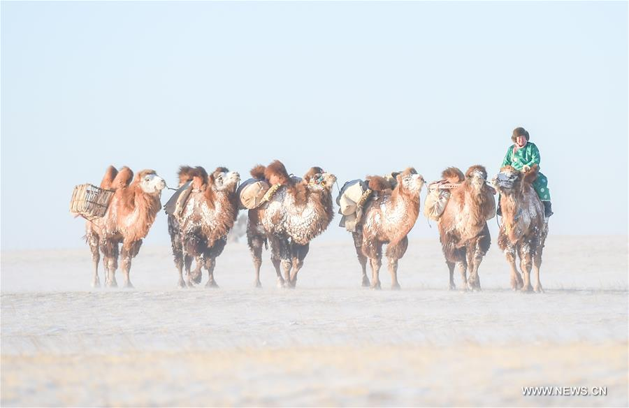 CHINA-INNER MONGOLIA-CAMEL FAIR (CN)